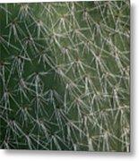 Big Cactus Pins. Close-up Metal Print