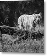 Big Cat In The Woods Metal Print