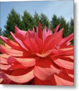 Big Dahlia Flower Blooming Summer Floral Art Prints Baslee Troutman Metal Print