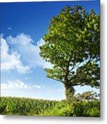 Big Elm Tree Near Corn Field Metal Print