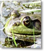 Big Eyed Frog In A Marsh Metal Print