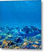 Big Fish. Underwater World. Metal Print