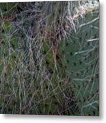 Big Fluffy Cactus Metal Print