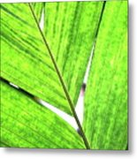 Big Green Leaf . 7d5763 Metal Print by Wingsdomain Art and Photography