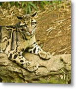 Big Kitty Cat Metal Print