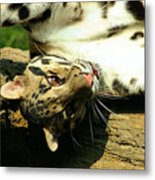 Big Kitty Fun Metal Print