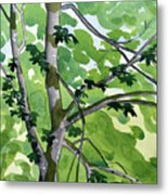 Big Leaf Maple Metal Print