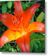 Big Orange Metal Print