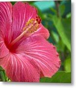 Big Pink Hibiscus Metal Print