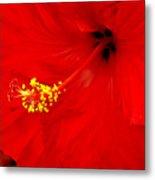 Big Red Caribbean Hibiscus Metal Print