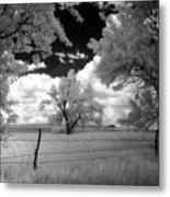 big tree in field IR Metal Print