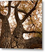 Big Tree Metal Print by James BO  Insogna