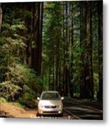 Big Tree Road Metal Print