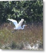 Big White Bird Flying Away Metal Print