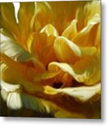 Big Yellow Rose Metal Print