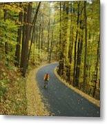Biker On Road Amidst Fall Foliage Metal Print
