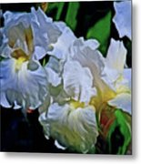 Billowing White Irises Metal Print