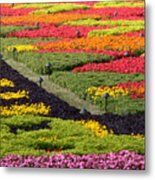 Biltmore Colors Metal Print