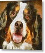 Bimbo - Bernese Mountain Dog Metal Print