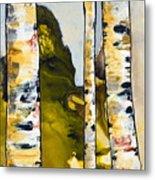Birch 1 Metal Print
