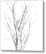 Birch Abstraction Study Metal Print