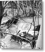 Birch And Stream Metal Print