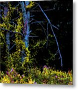 Birch And Vines Metal Print