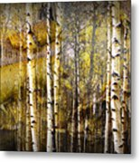 Birch Bark And Trees Abstract Metal Print