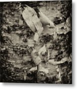Birch Bark Detail Monotone Img_6361 Metal Print