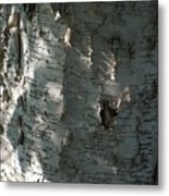 Birch Bark In Sun And Shadow Metal Print