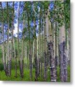 Birch Forest Metal Print by Julie Lueders