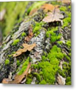 Birch Log Metal Print