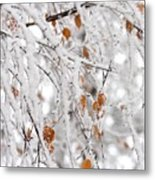 Frost Birch  Metal Print