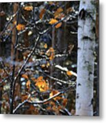 Birch Tree In Winter Metal Print