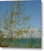 Birch Tree Over Lake Metal Print