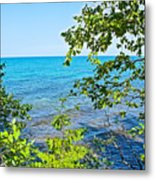 Birch Trees Above Lake Superior Off North Country Trail In Pictured Rocks National Lakeshore-mi Metal Print