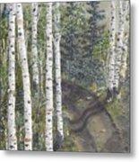 Birch Trees Along Kennys Road  2 Metal Print