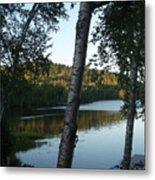 Birch Trees Along The Lake Metal Print