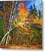 Birch Trees - Autumn Metal Print