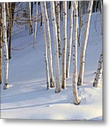 Birch Trees In The Snow, South Metal Print