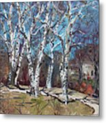 Birch Trees Next Door Metal Print