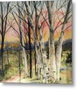 Birch Trees on Canvas Metal Print