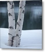 Birch Twins In Snow Metal Print