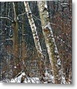 Birches During A Snowfall Metal Print