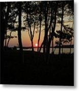 Birches Watch The Sunset Metal Print