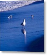 Bird At Ocean's Tide Metal Print
