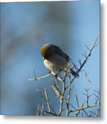Bird At Pontatoc Metal Print