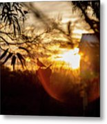 Bird At Sunset Color Metal Print