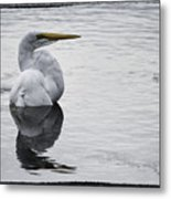 Bird Bath 4619 Metal Print