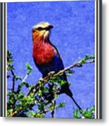Bird Beauty - No 7 P B With Decorative Ornate Printed Frame. Metal Print